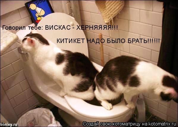 Котоматрица: Говорил тебе: ВИСКАС - ХЕРНЯЯЯЯ!!! КИТИКЕТ НАДО БЫЛО БРАТЬ!!!!!!