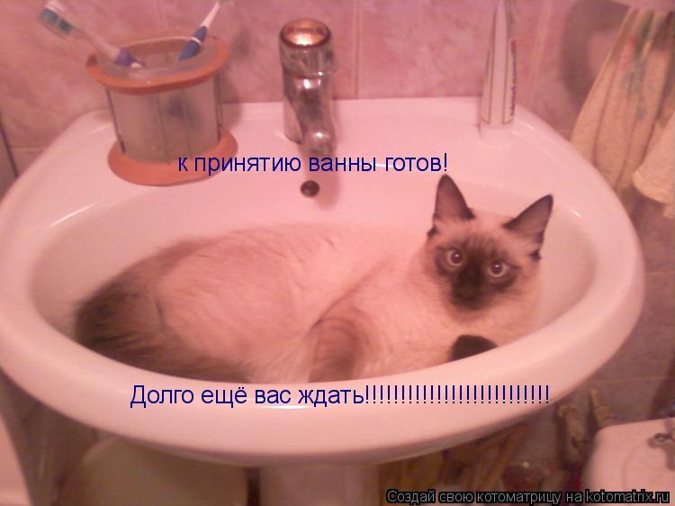 Котоматрица: к принятию ванны готов! Долго ещё вас ждать!!!!!!!!!!!!!!!!!!!!!!!!!!