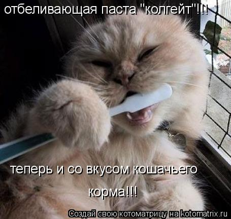 """Котоматрица: отбеливающая паста """"колгейт""""!!! теперь и со вкусом кошачьего  корма!!!"""