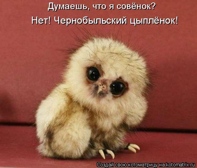Котоматрица: Думаешь, что я совёнок? Нет! Чернобыльский цыплёнок!