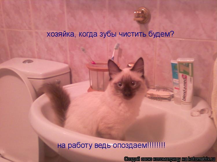 Котоматрица: хозяйка, когда зубы чистить будем? на работу ведь опоздаем!!!!!!!!