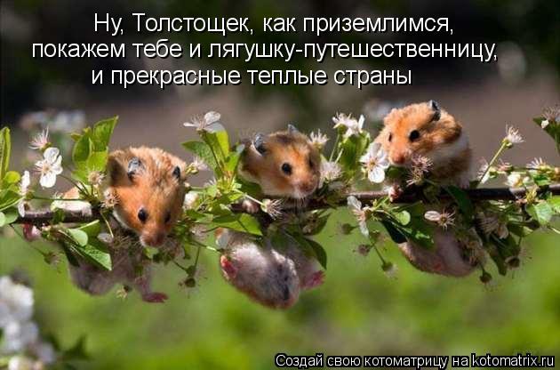 Котоматрица: Ну, Толстощек, как приземлимся, покажем тебе и лягушку-путешественницу, и прекрасные теплые страны