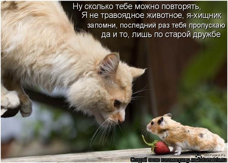 Котоматрица: Ну сколько тебе можно повторять, Я не травоядное животное, я-хищник запомни, последний раз тебя пропускаю да и то, лишь по старой дружбе