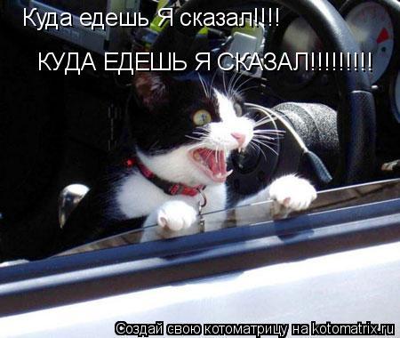 Котоматрица: КУДА ЕДЕШЬ Я СКАЗАЛ!!!!!!!!! Куда едешь Я сказал!!!!