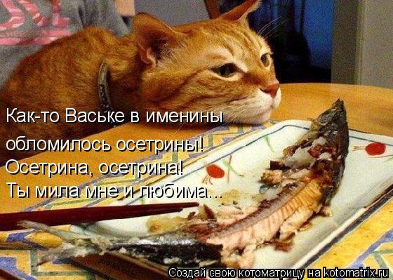 Котоматрица: Как-то Ваське в именины обломилось осетрины! Осетрина, осетрина! Ты мила мне и любима...