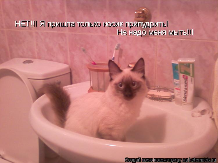 Котоматрица: НЕТ!!! Я пришла только носик припудрить!  Не надо меня мыть!!!