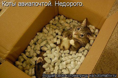 Котоматрица: Коты авиапочтой. Недорого.