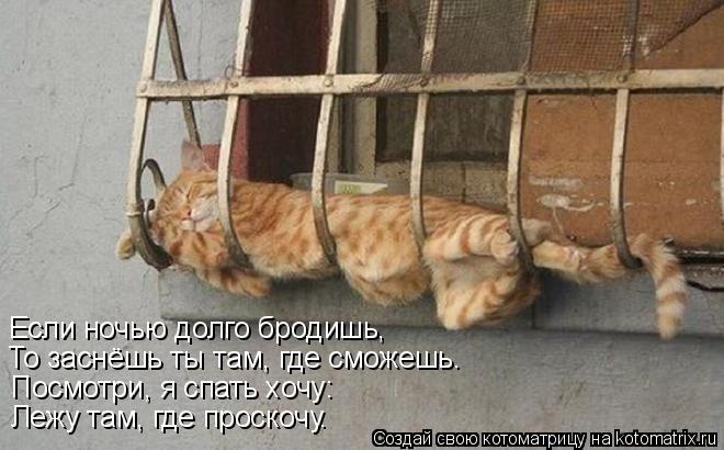 Котоматрица: Если ночью долго бродишь, То заснёшь ты там, где сможешь. Посмотри, я спать хочу: Лежу там, где проскочу.