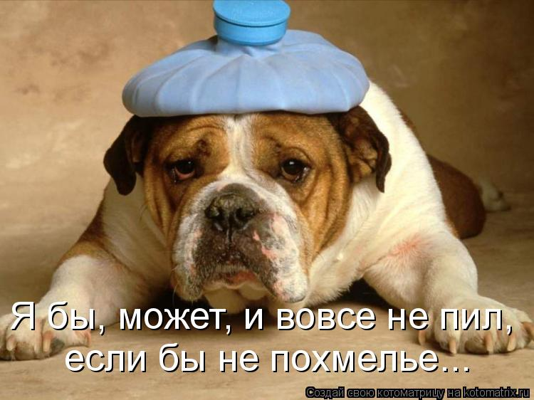 Котоматрица: Я бы, может, и вовсе не пил,  если бы не похмелье...