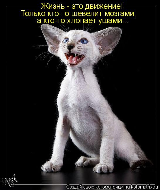 Котоматрица: Жизнь - это движение! Только кто-то шевелит мозгами, а кто-то хлопает ушами...