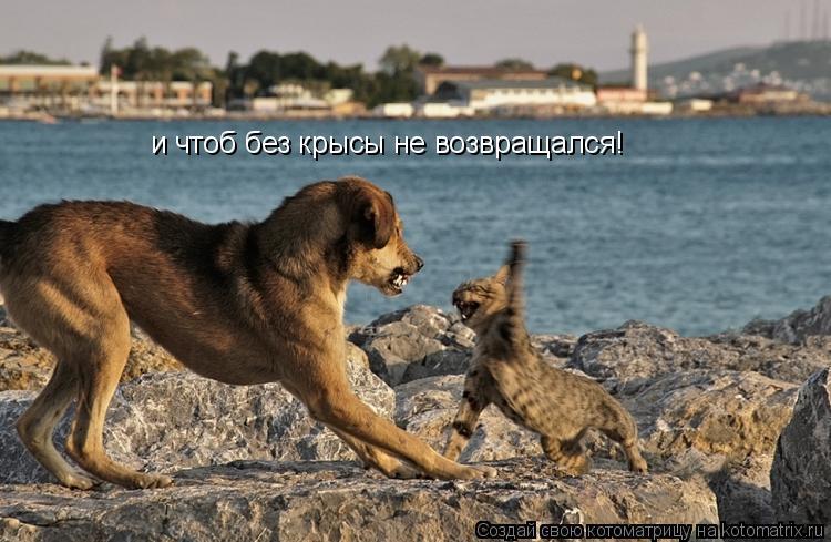 Котоматрица: и чтоб без крысы не возвращался!