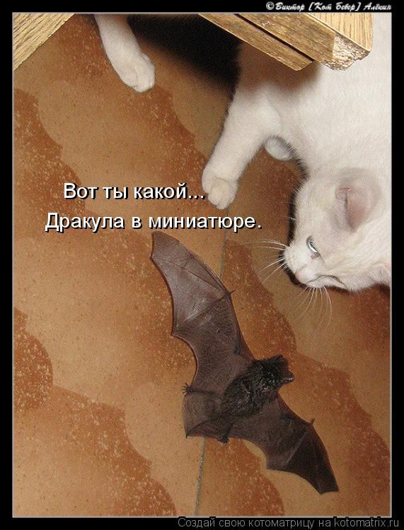 Котоматрица: Дракула в миниатюре. Дракула в миниатюре. Вот ты какой... Вот ты какой...