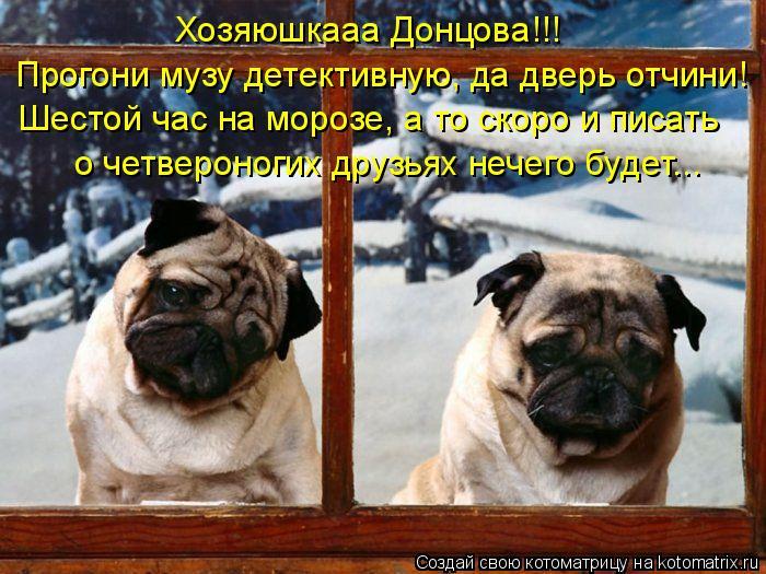 Котоматрица: Хозяюшкааа Донцова!!! Прогони музу детективную, да дверь отчини! Шестой час на морозе, а то скоро и писать  о четвероногих друзьях нечего буд