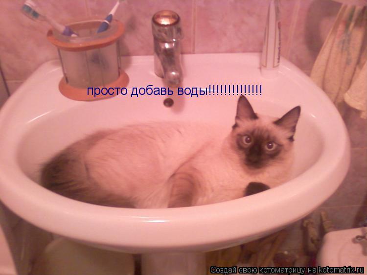 Котоматрица: просто добавь воды!!!!!!!!!!!!!!