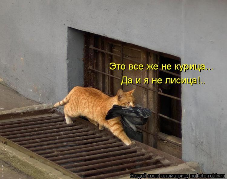 Котоматрица: Это все же не курица... Да и я не лисица!..