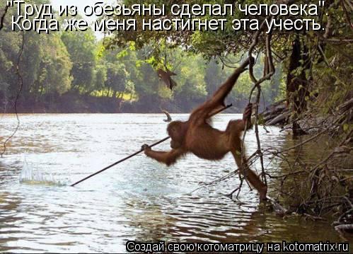 """Котоматрица: """"Труд из обезьяны сделал человека"""". Когда же меня настигнет эта учесть."""