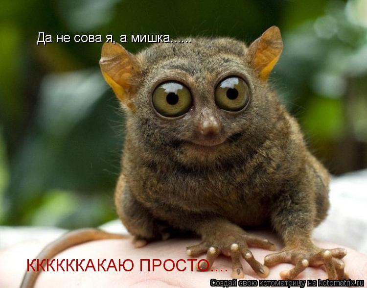 Котоматрица: Да не сова я, а мишка...... ККККККАКАЮ ПРОСТО....
