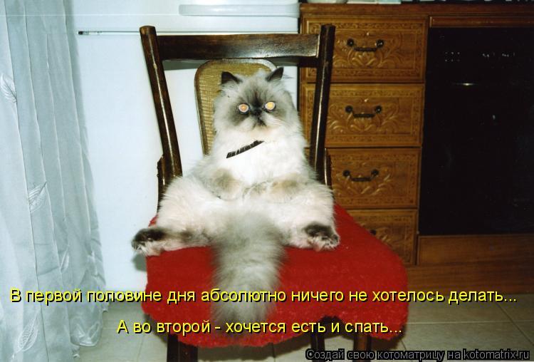 Котоматрица: В первой половине дня абсолютно ничего не хотелось делать... А во второй - хочется есть и спать...