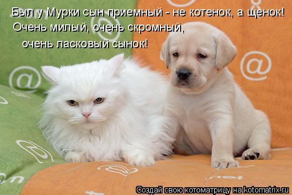 Котоматрица: Был у Мурки сын приемный - не котенок, а щенок! Очень милый, очень скромный, очень ласковый сынок!