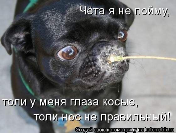 Котоматрица: Чёта я не пойму,  толи у меня глаза косые, толи нос не правильный!