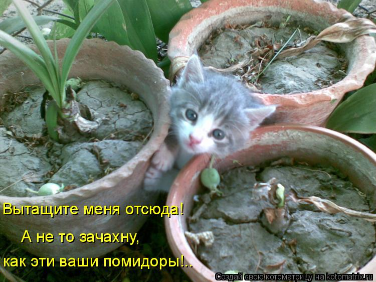 Котоматрица: Вытащите меня отсюда! как эти ваши помидоры!.. А не то зачахну,