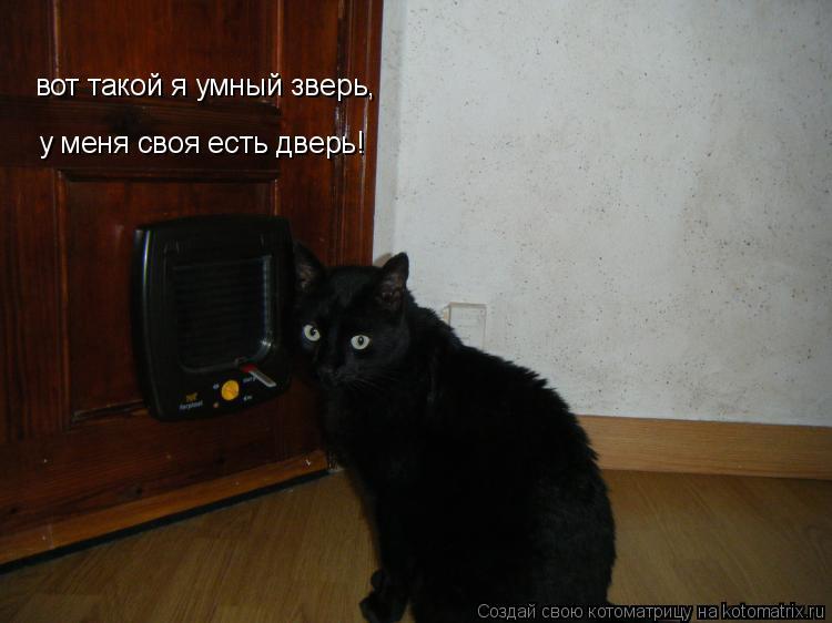 Котоматрица: вот такой я умный зверь, у меня своя есть дверь!