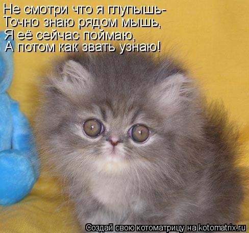 Котоматрица: Не смотри что я глупышь- Точно знаю рядом мышь, Я её сейчас поймаю, А потом как звать узнаю!
