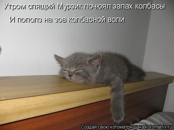 Котоматрица: Утром спящий Мурзик почюял запах колбасы  И пополз на зов колбасной воли