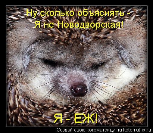Котоматрица: Ну сколько объяснять -  Я не Новодворская! Я - ЕЖ!