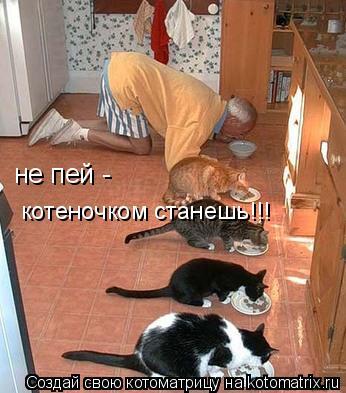 Котоматрица: не пей -  котеночком станешь!!!