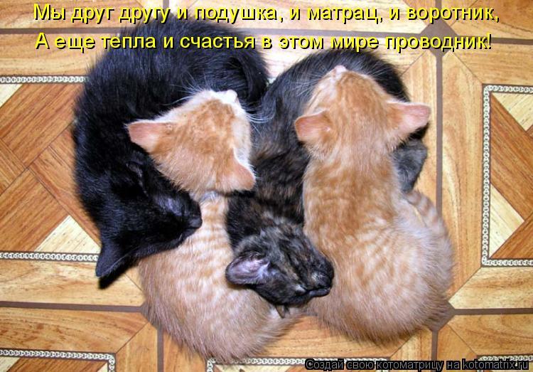 Котоматрица: Мы друг другу и подушка, и матрац, и воротник, А еще тепла и счастья в этом мире проводник!