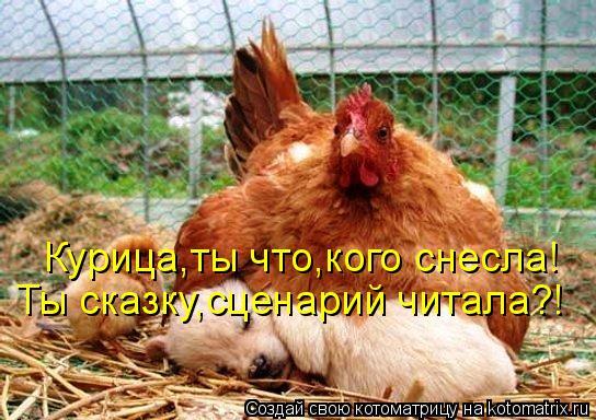 Котоматрица: Курица,ты что,кого снесла! Ты сказку,сценарий читала?!