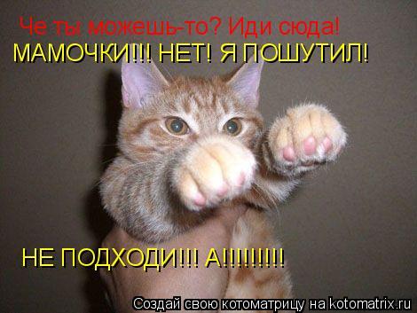 Котоматрица: Че ты можешь-то? Иди сюда! МАМОЧКИ!!! НЕТ! Я ПОШУТИЛ!  НЕ ПОДХОДИ!!! А!!!!!!!!!