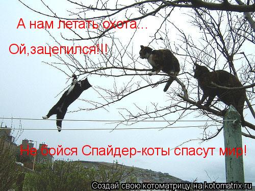 Котоматрица: А нам летать охота... Ой,зацепился!!! Не бойся Спайдер-коты спасут мир!