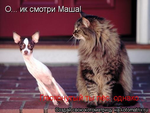 Котоматрица: О... ик смотри Маша! Глюконутый ты пёс, однако...