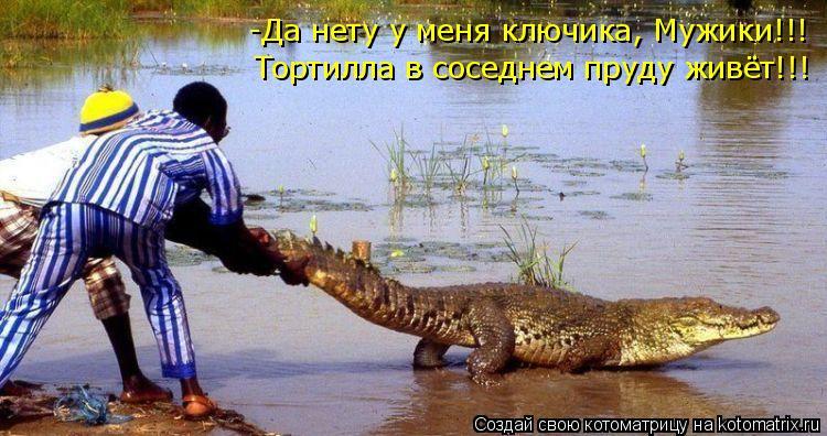 Котоматрица: -Да нету у меня ключика, Мужики!!! Тортилла в соседнем пруду живёт!!!