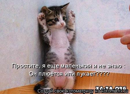 Котоматрица: Простите, я еще маленький и не знаю : Он плюётся или пукает????