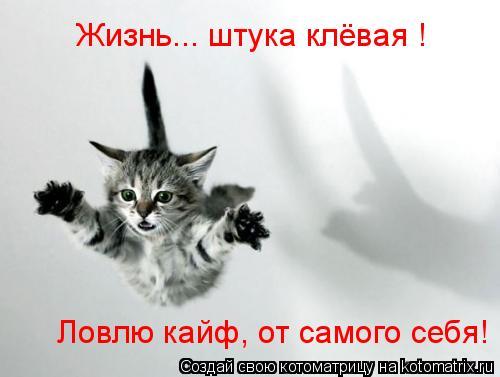 Котоматрица: Жизнь... штука клёвая !  Ловлю кайф, от самого себя!