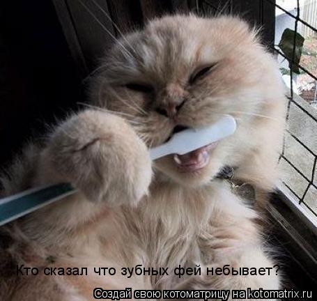 Котоматрица: Кто сказал что зубных фей небывает?