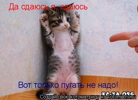 Котоматрица: Да сдаюсь я, сдаюсь Вот только пугать не надо!