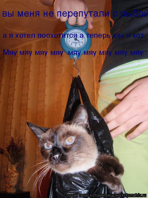 Котоматрица: вы меня не перепутали с рыбой а я хотел поохотится а теперь как я кот Мяу мяу мяу мяу  мяу мяу мяу мяу мяу... Мяу мяу мяу мяу  мяу мяу мяу мяу мяу