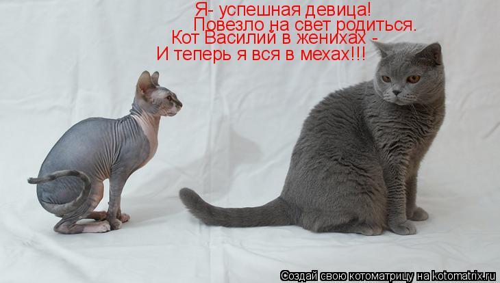 Котоматрица: Я- успешная девица! Повезло на свет родиться. Кот Василий в женихах - И теперь я вся в мехах!!!