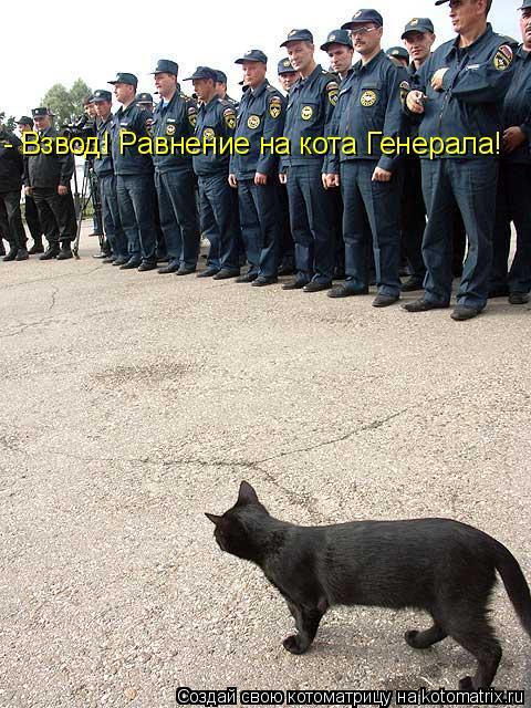 Котоматрица: - Взвод! Равнение на кота Генерала!