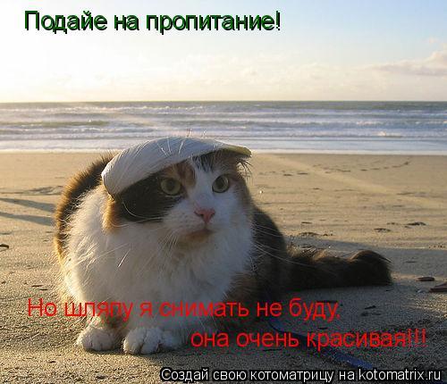 Котоматрица: Подайе на пропитание! Но шляпу я снимать не буду, она очень красивая!!!
