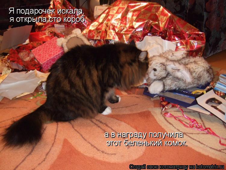 Котоматрица: Я подарочек искала, я открыла сто короб, а в награду получила  этот беленький комок.
