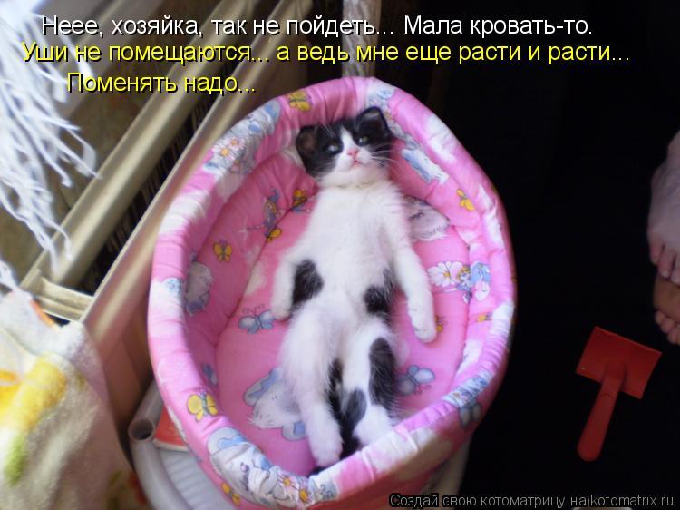 Котоматрица: Неее, хозяйка, так не пойдеть... Мала кровать-то. Уши не помещаются... а ведь мне еще расти и расти... Поменять надо...