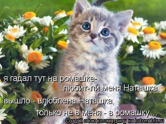 Котоматрица: я гадал тут на ромашке- любит-ли меня Наташка. вышло - влюблена Наташка, только не в меня - в ромашку....