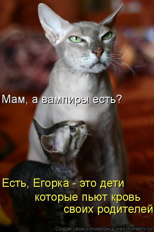 Котоматрица: Мам, а вампиры есть? Есть, Егорка - это дети   своих родителей  которые пьют кровь