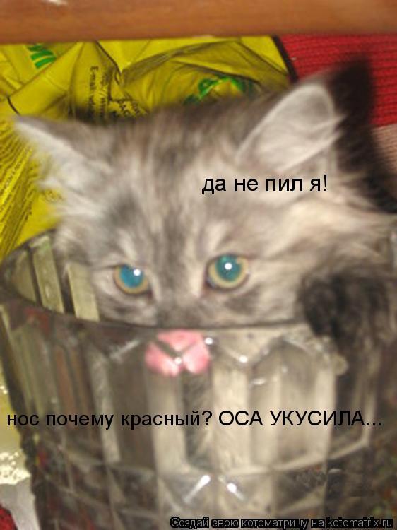 Котоматрица: да не пил я! нос почему красный? ОСА УКУСИЛА...