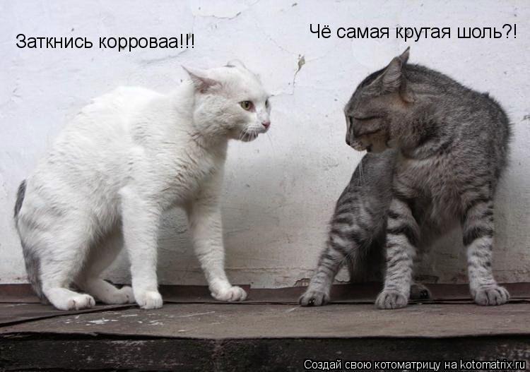 Котоматрица: Чё самая крутая шоль?! Заткнись корроваа!!!